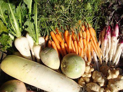 お野菜の選び方