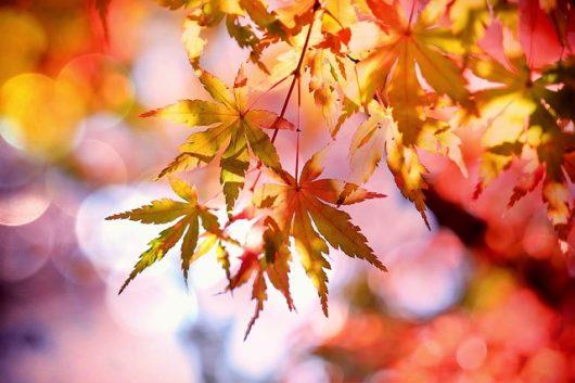 秋と言えば
