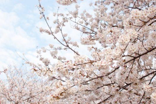 🌸春ですね🌸