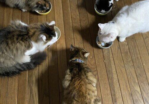 猫猫猫猫猫猫
